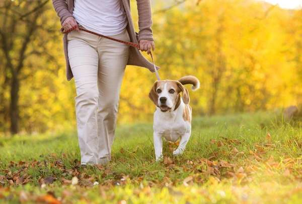 Seniors who walked dogs had lower body mass