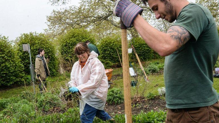 Teresa Bernard of East Northport, center, weeds the
