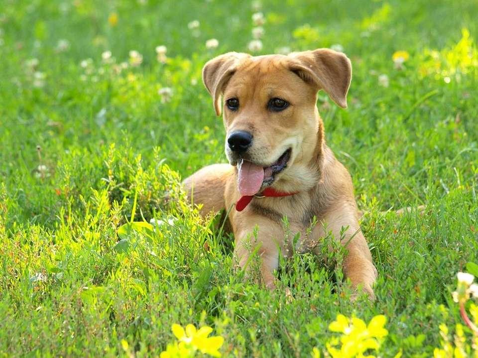 Just like you, your dog can get allergies.