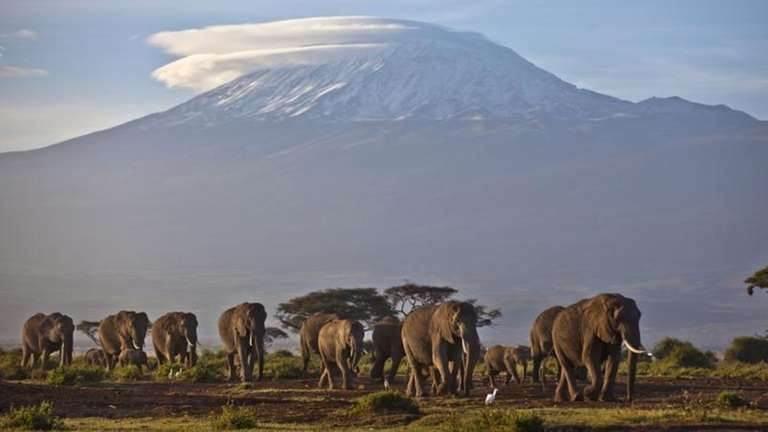 A herd of adult and baby elephants walks