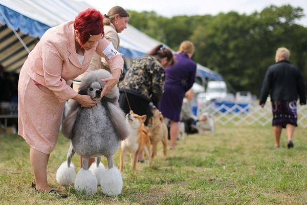 Lori Gillispie handles her standard poodle, Ziva, during