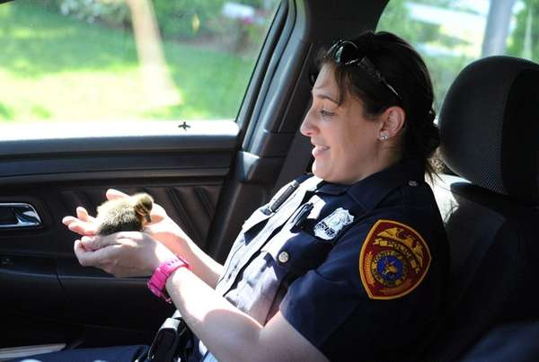 Suffolk Police Officer Jessica Proios holds an injured