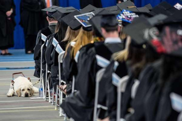 A service dog gets a rest as graduates