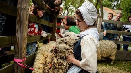 Educator Lauri Beckerman, of Islip, shears wool from