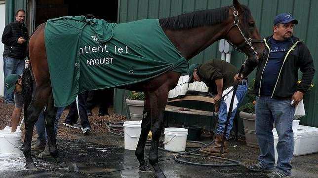 Kentucky Derby winner Nyquist is bathed after a
