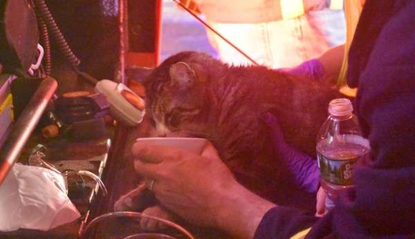 Firefighters care for one of three cats rescued