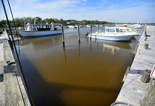 Photo of what may be mahogany tide, as