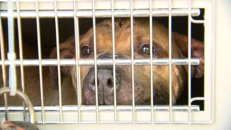 Asbury Park dog-fighting ring busted in nationwide sweep