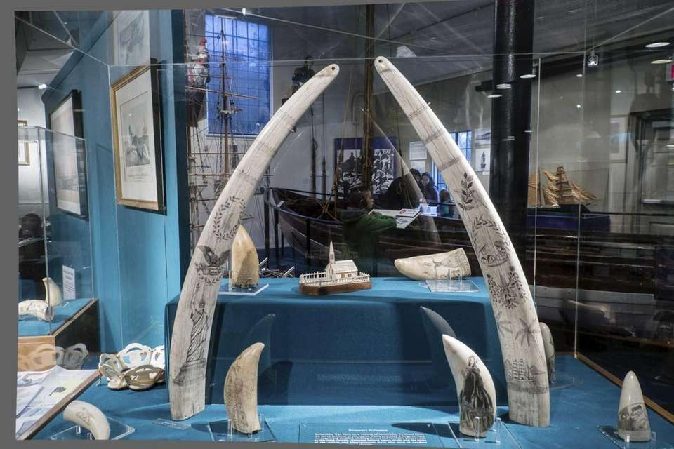 Dads get free admission to the Whaling Museum