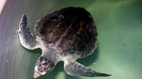 Legislation introduced in Albany would protect marine mammals