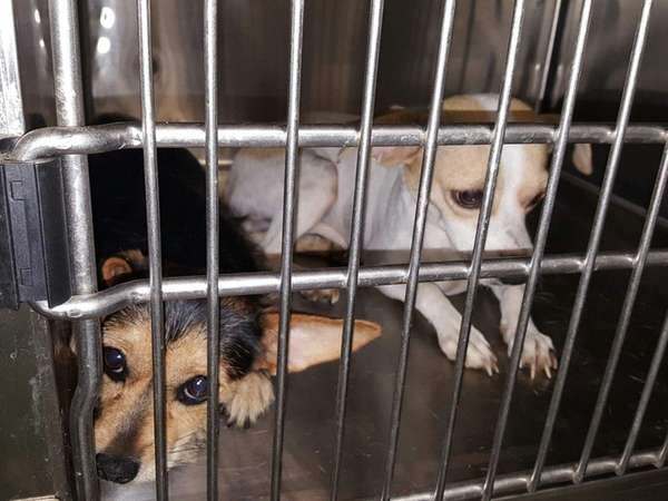 These dogs found locked in a crate and