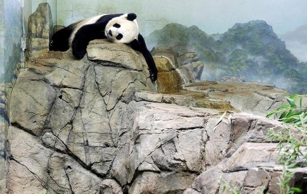 Big fun awaits with giant panda Mei Xiang
