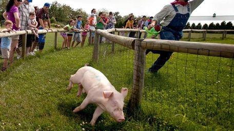 Harbes Family Farm (715 Sound Ave., Mattituck) puts