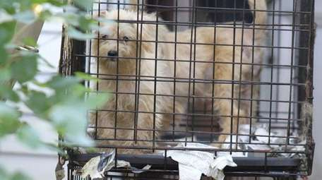 Dogs are removed from an East Meadow home