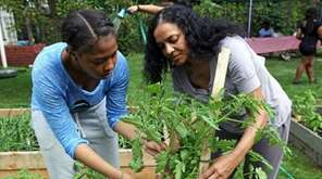 The Seed to Table Community Garden provides more