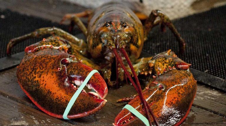 Giant lobster at Jordan Lobster Farms in Island