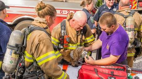 Firefighters provide oxygen to a dog rescued from