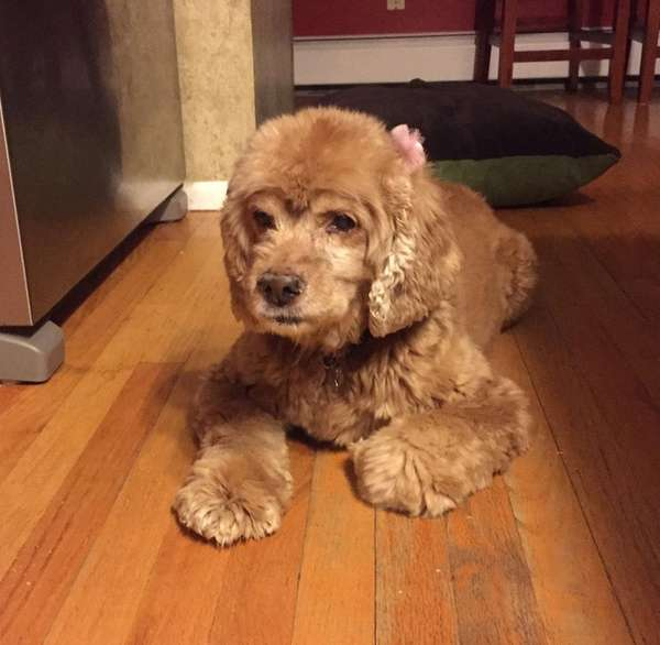 Coco was fostered by the Stegner family of
