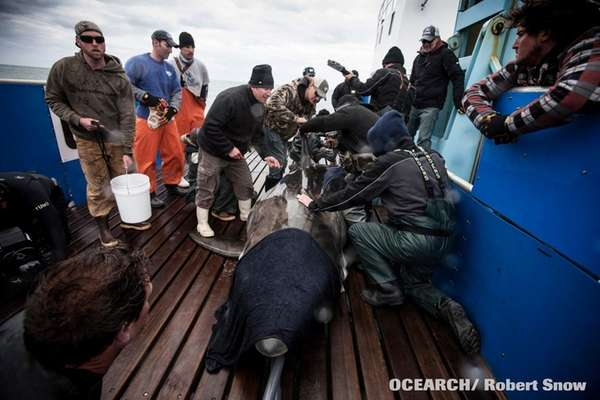 The Wildlife Conservation Society and Ocearch, the research