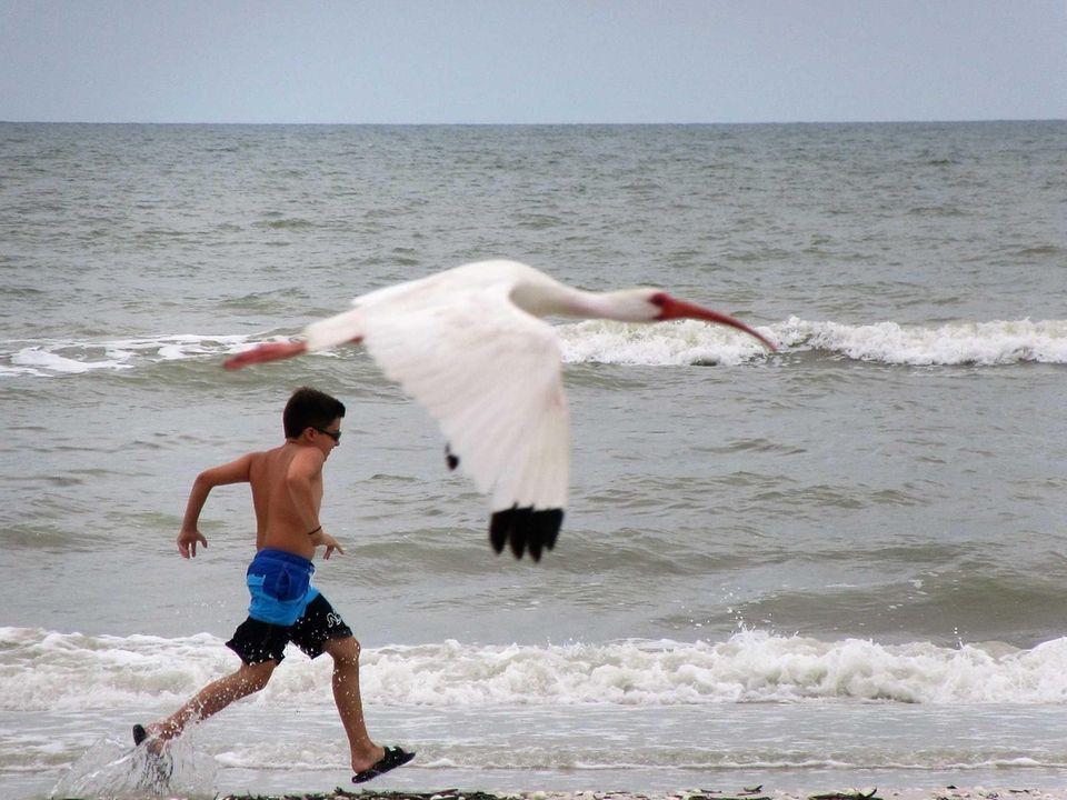 Sanibel Island, FLORIDA...running with the wildlife