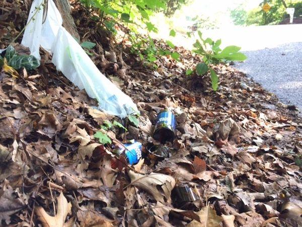 Roadside litter, including beer bottles