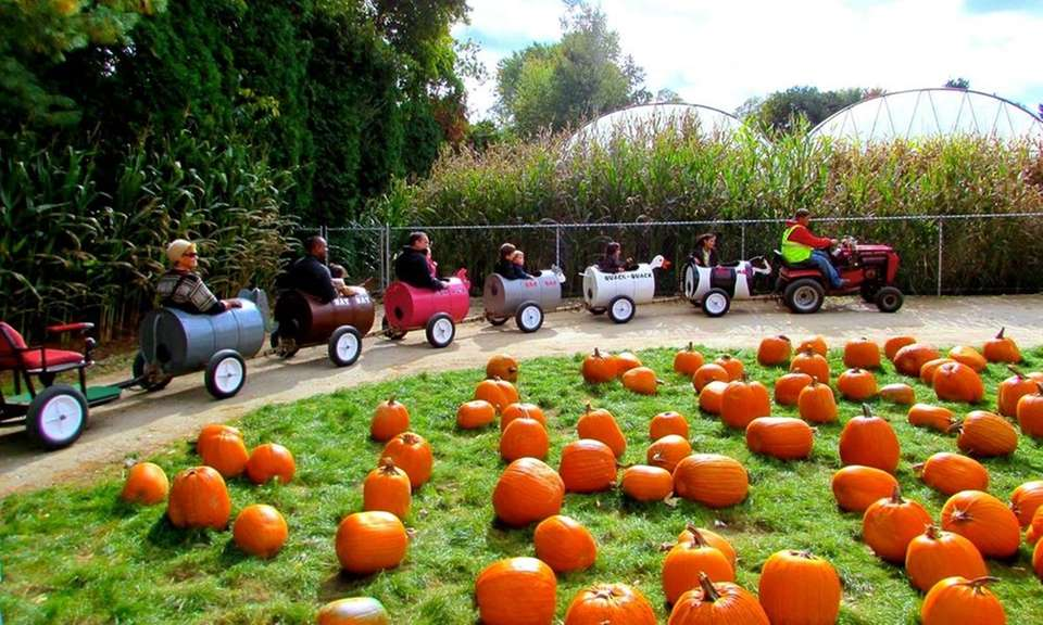 The family festival includes pumpkin-picking, hayrides, an animal