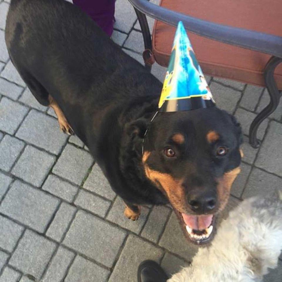 Celebrating Stella's 5th birthday