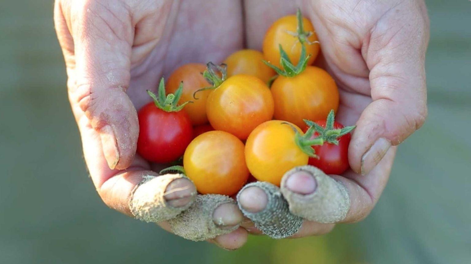 East End farmer seeks seed revolution