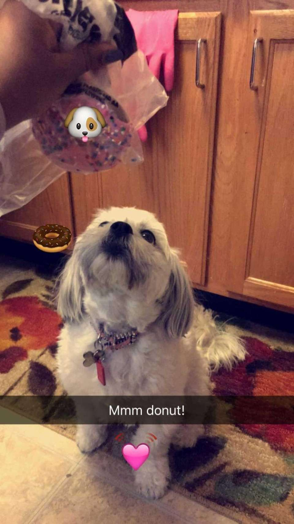 This birthday featured Emma's favorite treat! Puppy donuts!!