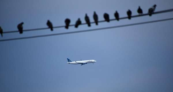 Birds sit on a wire in the foreground