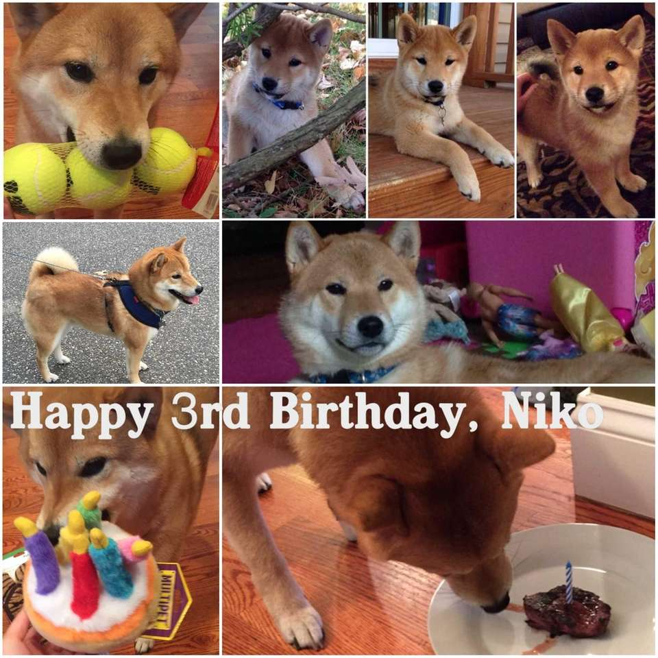 Niko's 3rd Birthday, August 20, 2106. Collage of