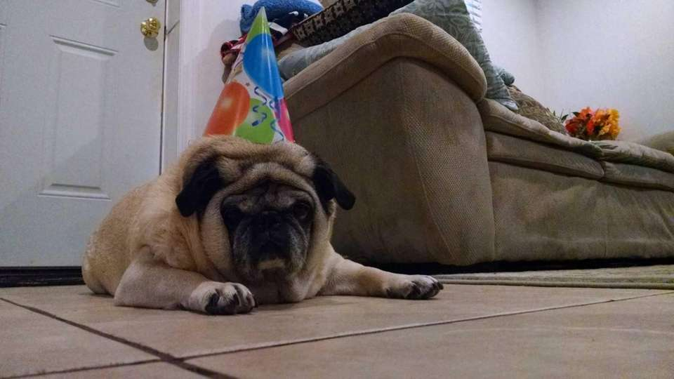 Cleo, 12, celebrated her birthday on July 26.