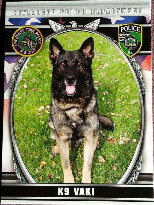 Vaki, a K-9 with the Riverhead Police Department
