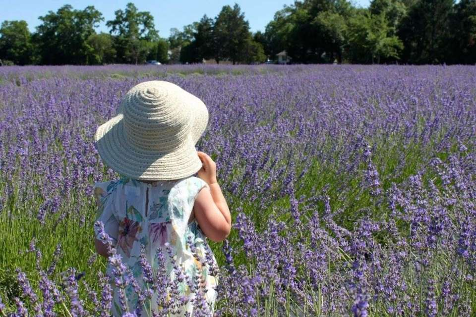 2yr old Caitlin playing in the lavender fields