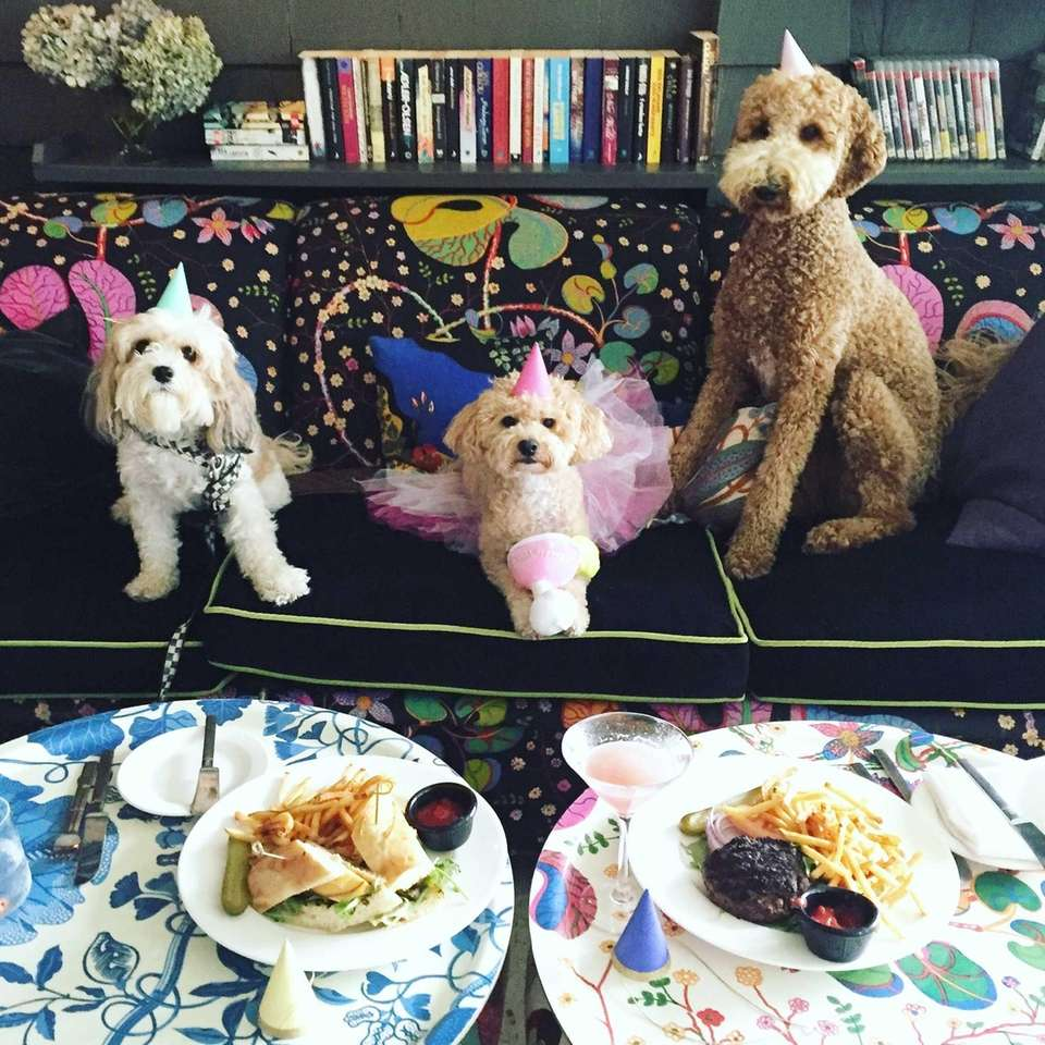 @Zuzuthecavachon enjoying lunch with the birthday girl @puppynamedCharlie's