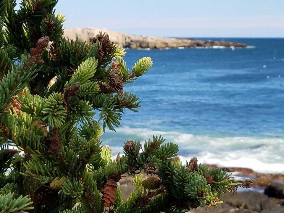 9/2/16 - Otter Point, Maine. Enjoying the beautiful