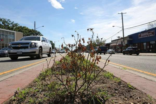Plantings in the median on Hillside Avenue on