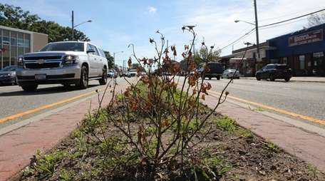 Plantings in the median on Hillside Avenue on