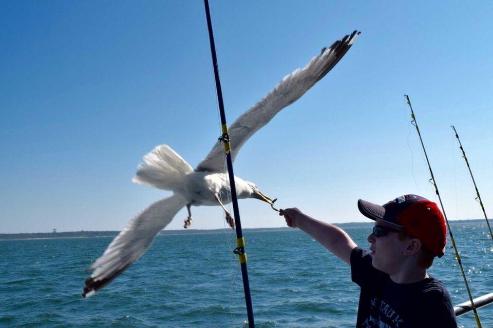 Brody Prendergast feeding a seagull a minnow on
