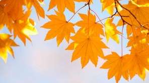 Autumn, Leaf, Tree, Morning, Japanese Fall Foliage, Branch,