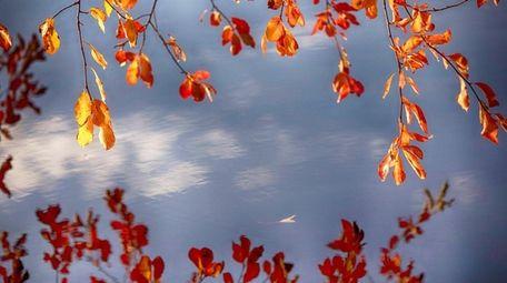 Fall foliage at Argyle Lake in Babylon on