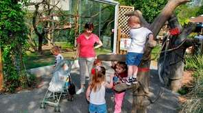 Children can play like animals at Kronkosky's Tiny