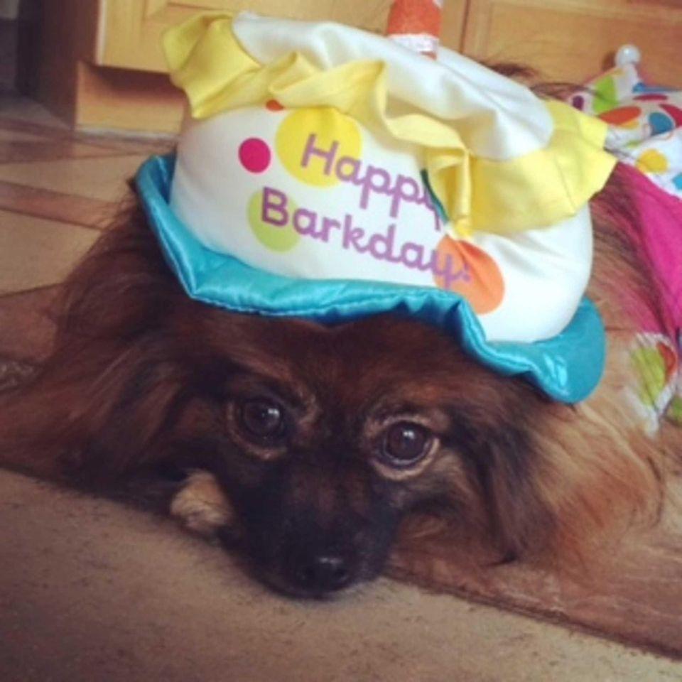 Nikka Birthday