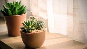 Most succulents have simple requirements, such as being