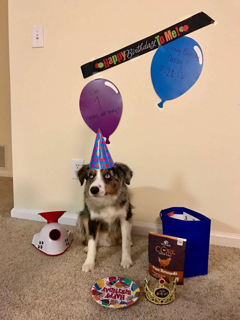 Happy 1st Birthday to our Oakley!