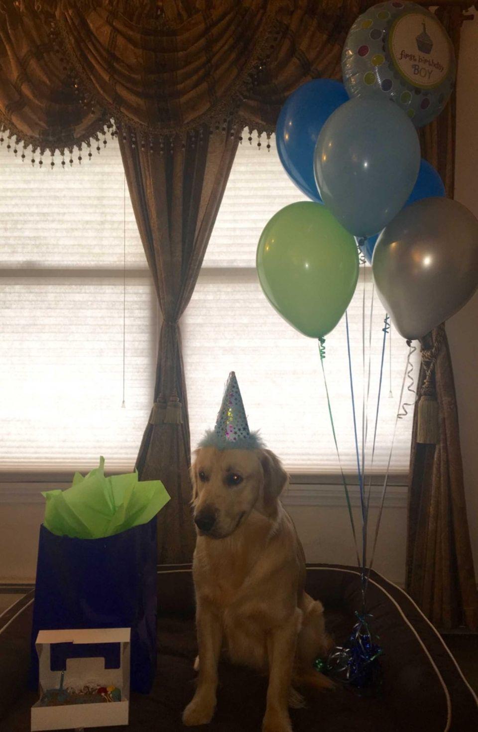 Celebrating Romos 1st Birthday!