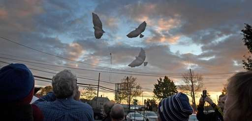 People release balloons shaped like doves to remember