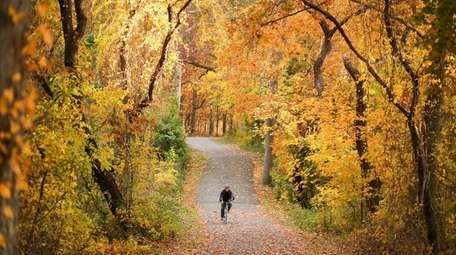 Surrounded by fall foliage, a man rides his