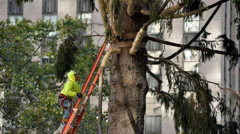 A worker begins to trim and untie branches