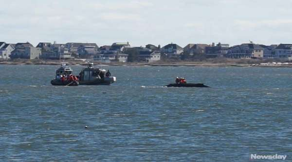 A team of veterinarians arrived at Moriches Bay